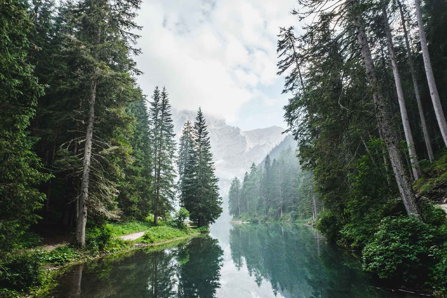 A Lake And A Conifer Forest