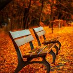 How to move in autumn