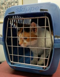 feline in a pet carrier when relocating with cats in NYC