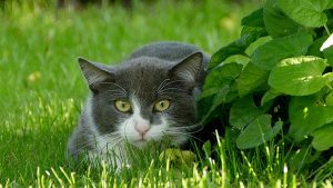 A grey cat hiding behind the leaves