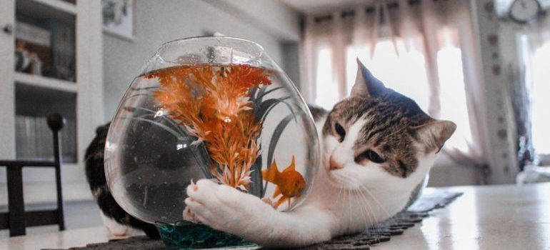 Cat playing with a fish bowl.