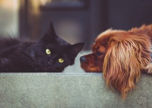 A black cat and a brown dog.