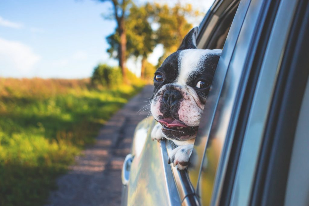 A Dog on the Road to a New Home in One of the Most Dog-friendly Cities in the US