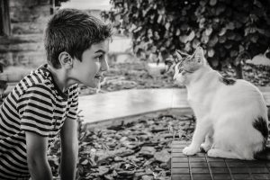 a child looking at a white cat before relocating cats to a new home