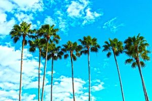 palm trees and a sky