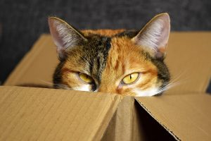 a black and yellow cat peeking from a cardboard moving box