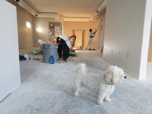 a close-up of a house remodeling process and a dog