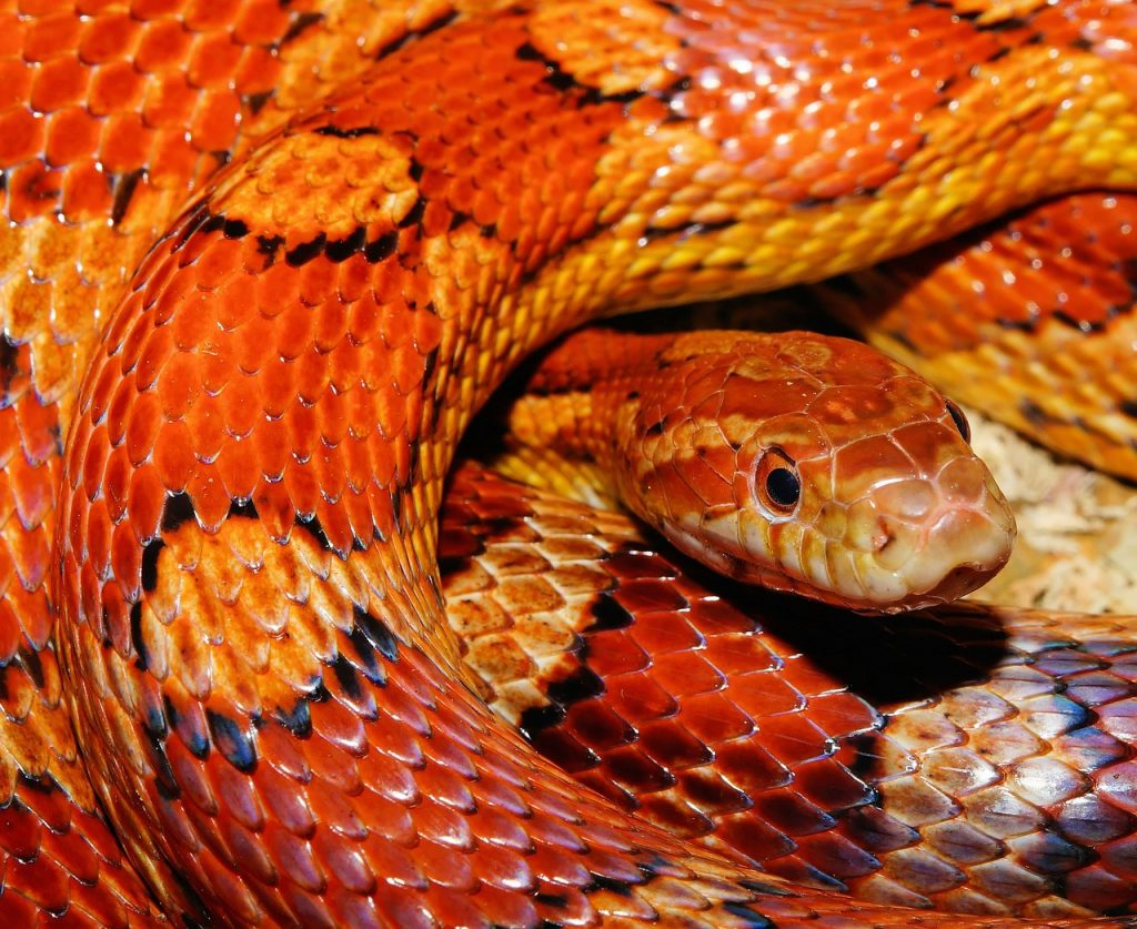 A coloful snake