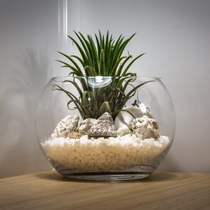 Tips for moving your pet terrarium